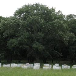 A bee farm.